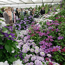 Getting Around – Your Transport Options for the 2016 Chelsea Flower Show