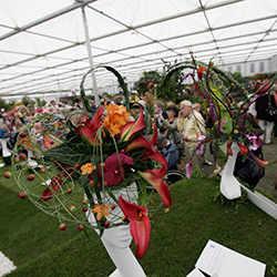 Learning about the Chelsea Flower Show