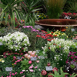 Top Green-Fingered Advice on the Chelsea Flower Show