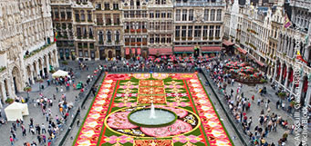 Brussels Flower Carpet