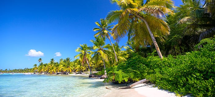 Caribbean sand beaches with palm tree, Dominican Republic
