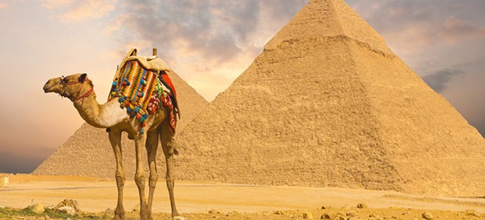 A colorfully saddled camel waits for its owner in front of the Pyramid