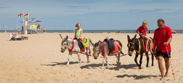 Donkey Rides on the Beach