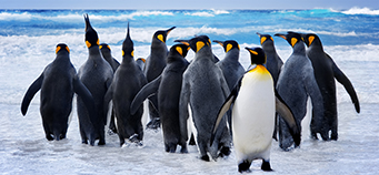 Antartica Escorted Tours